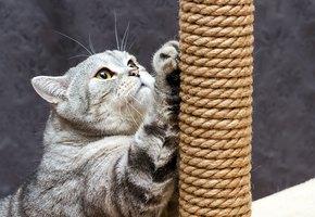 Когтеточка для кошки своими руками: 3 недорогих проекта