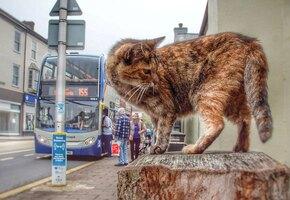 Еле нашли! Кошка-беглянка проехала на трех автобусах, чтобы добраться до моря