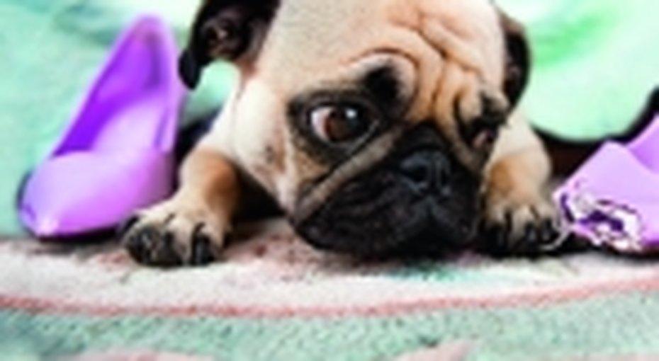 Как оставить щенка одного дома?