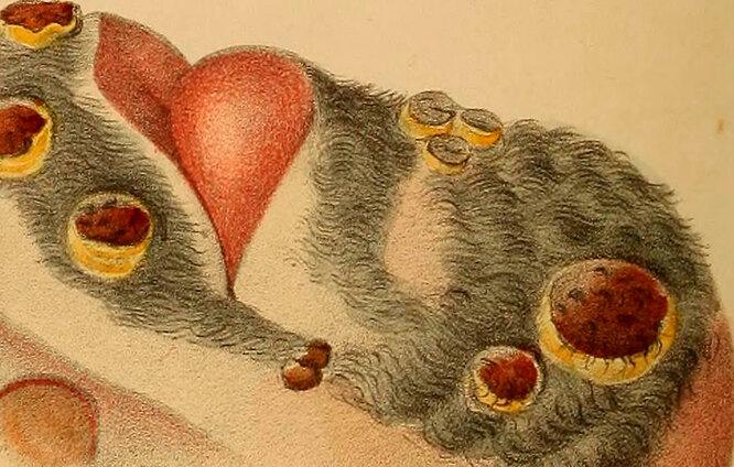 «Полный практический труд по природе и лечению венерических заболеваний и других поражений мочеполовых органов мужчин и женщин ...» (1848 г.)