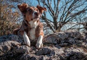 Эта собака спасает жизни: он может унюхать пропавшего за километры