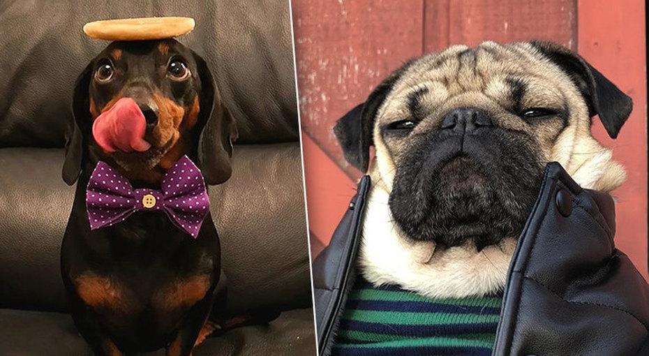 Гав-гав ифото: 10 Instagram-страничек очень милых собак