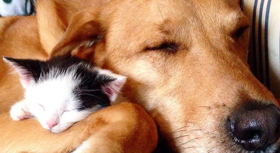 Это любовь! Спасенный пес вырастил больше 60 приютских котят
