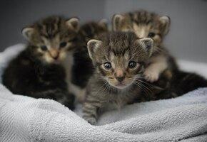 Ученые доказали: смотреть на кошек не только приятно, но и полезно для здоровья