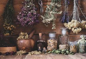 Зверобой, чистотел и ещё 5 самых полезных дикорастущих растений