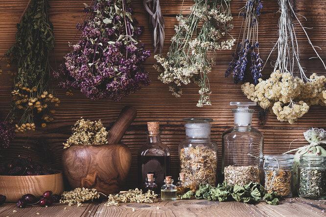 Зверобой, чистотел иещё 5 самых полезных дикорастущих растений