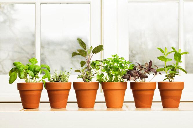 Как вырастить рассаду наподоконнике: 5 необычных способов выращивания рассады