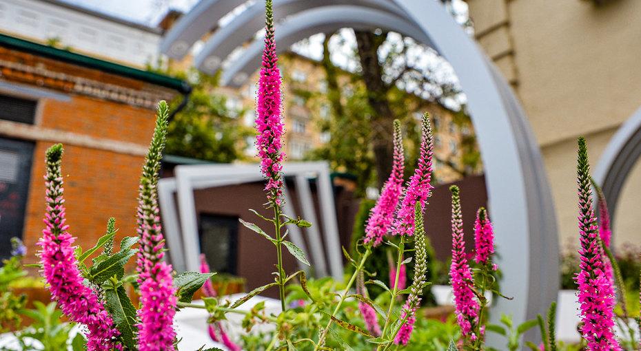 Красный сад, сад-лабиринт исад помотивам «Мастера иМаргариты»:  фестиваль «Цветочный джем» украсил Москву
