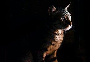 «Не надо, Вася!»: домашний кот напугал медведя и защитил хозяев