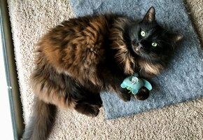 Как сохранить чистоту в доме, если у вас кошка