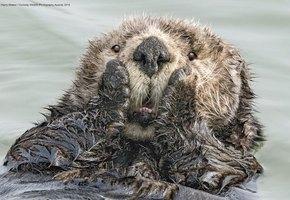 Очень смешные дикие животные – победители самого милого конкурса в мире