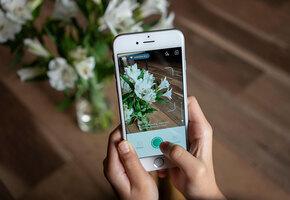 Грибы, птицы, цветы и насекомые: 8 лучших приложений для распознавания всего