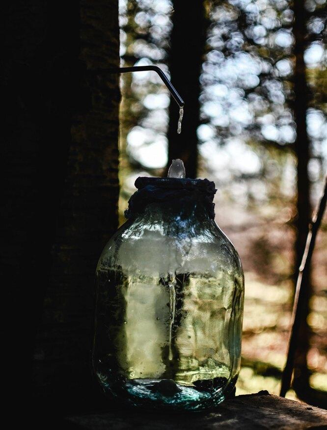 Фото: дикоросы. Березовый сок