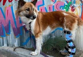 Американский доктор Айболит делает протезы всем животным – от собаки до слона