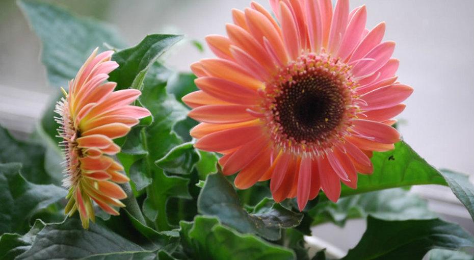 Самые полезные комнатные растения, которые очищают воздух вдоме