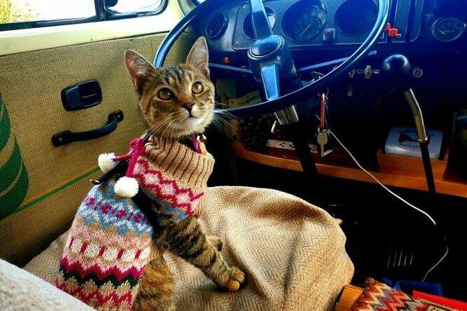 Влюбленные застряли нагод вМехико, чтобы небросать бездомную кошку