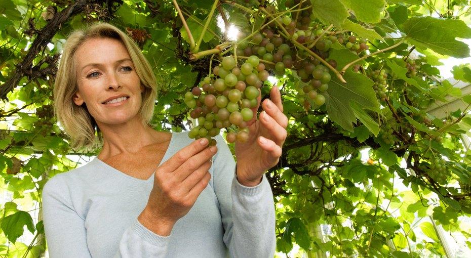 Виноградная Диета Результаты. Меню и результаты виноградной диеты