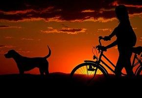 8 лайфхаков, делающих жизнь с собакой комфортнее