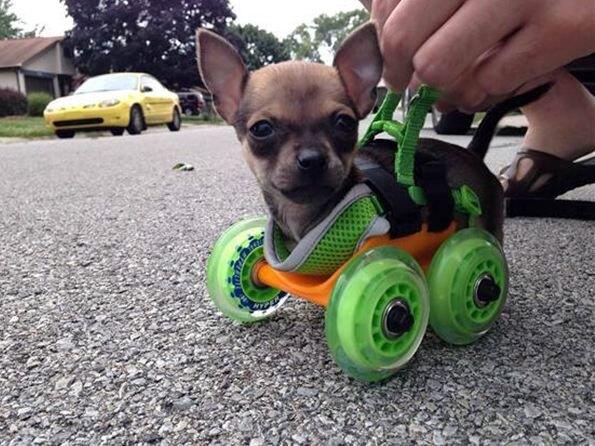 На 3D принтере распечатали коляску для инвалида