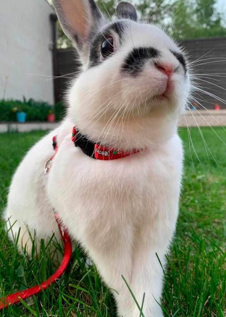 кролик ксения алферова