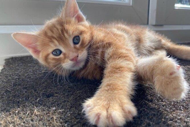 Врач предложил усыпить котенка безгениталий. Но хозяйка решила занего бороться