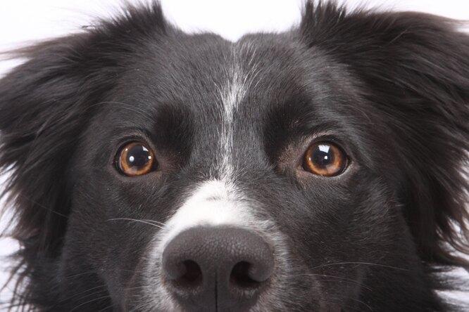 В московском приюте нашли собаку, забытую всеми 6 лет назад. Какая она сейчас?