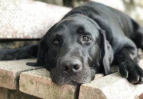 Волонтеры выходили собаку, которая уже не хотела жить. Вот как она изменилась