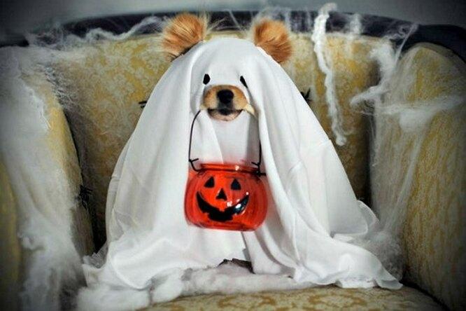 13 карнавальных костюмов кХэллоуину длявашей собаки
