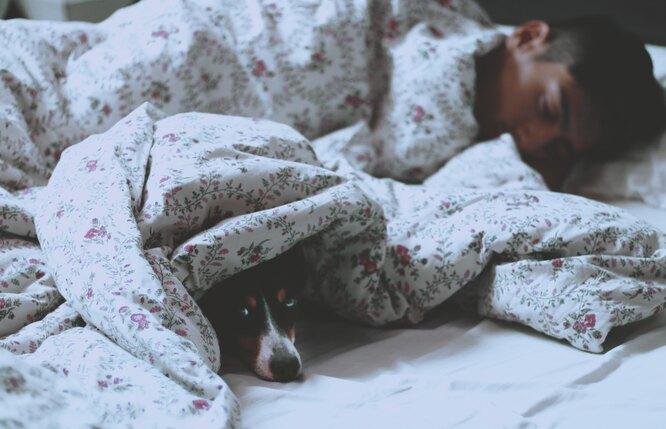 постель, спящий, сон, собака