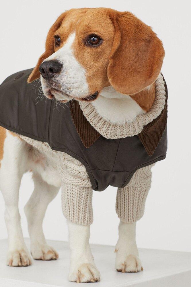 Вощёное пальто с воротником, H&M, 1599 руб.