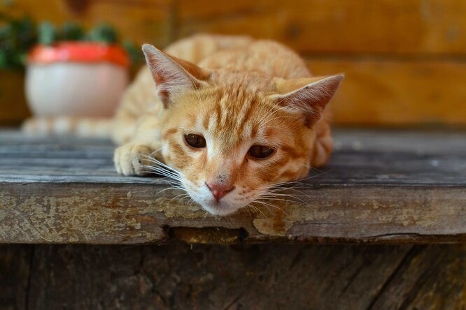 Ветеринары предупреждают: солевые лампы смертельно опасны длядомашних животных