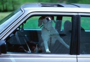 Мужчина обнаружил в машине спящего пса. Он оказался там неслучайно