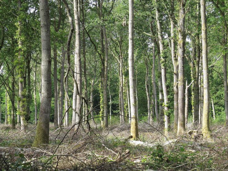 Кричащий лес