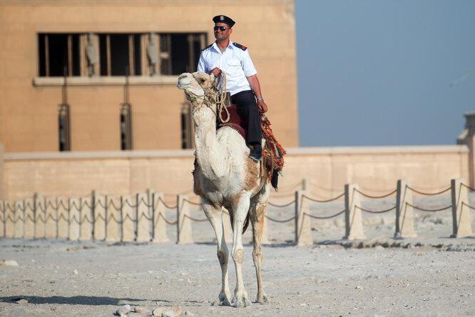 Вся мощь налицо: парад полуголых полицейских Каира вызвал восторг узрителей