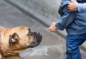 «Боимся за детей»: куда жаловаться, если собаку выгуливают без намордника?