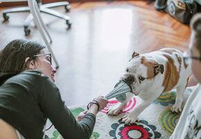 Повезло глупышу! В Ирландии чудом спасли собаку, съевшую девять носков