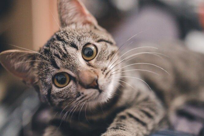 «Он плачет часами»: пожилой кот рыдает каждый раз, когда снего снимают свитер