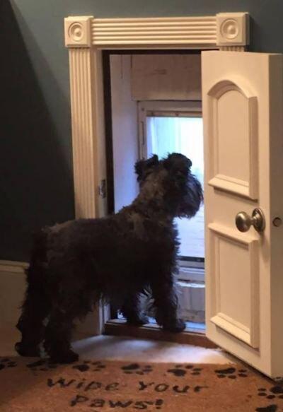 Собачья дверь в лето