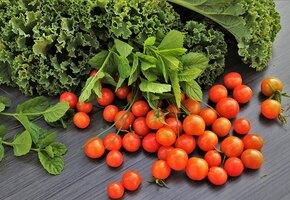 10 рецептов с зелеными салатами. Романо, латук, корн, фризе, радичио и другими