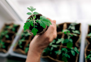 10 нужных вещей, чтобы вырастить рассаду на подоконнике