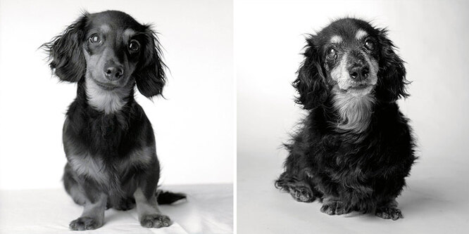 Лили: 8 месяцев и 15 лет