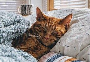 Хозяин и три «хвоста»: пассажир поезда «Москва-Анапа» выкупил для кошек все купе