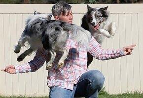 «Это безумие»: пара собак поставила мировой рекорд по количеству трюков в минуту