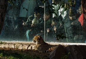 Потому что любовь: пенсионер выкупил 33 333 билета в зоопарк в память о жене