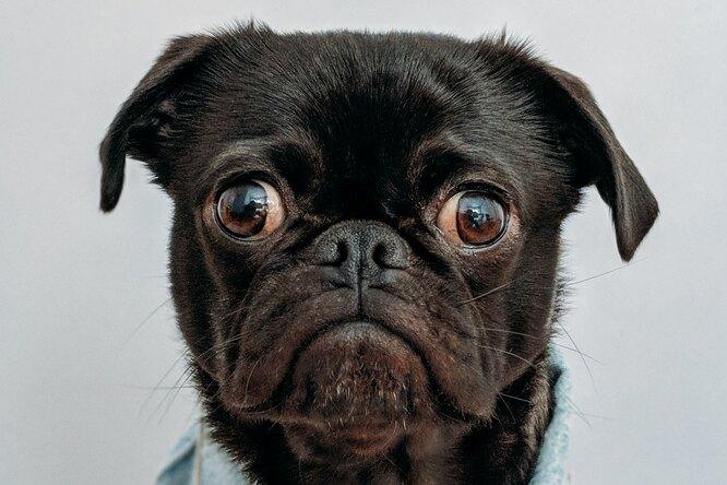 Учитель неповерит: видео длятех, чью домашку тоже «съедала собака»