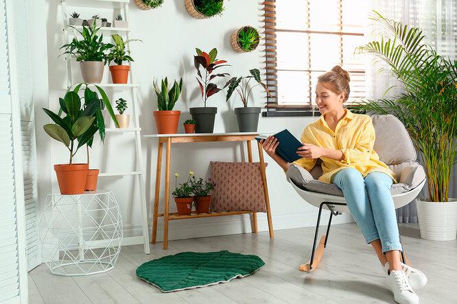 10 комнатных растений, которые принесут вдом богатство иудачу