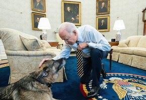 Упитанные, но невоспитанные: собак президента США выселяют из Белого дома