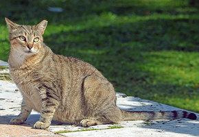 Беременность кошки: признаки, уход, длительность
