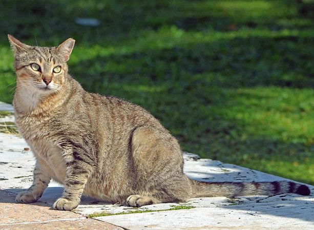 Как определить срок беременности кошки по внешним признакам