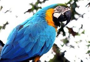 Роман или скука? Последний дикий попугай в Рио ежедневно навещает зоопарк